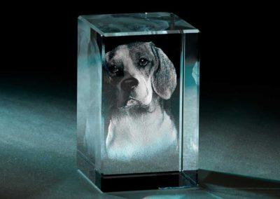 Glasgravur Hund